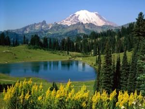 natura munti verde
