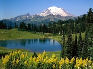 natura munti verde vacanta