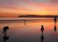 caine familie mare plaja sursa foto purecornwall punct co punct uk
