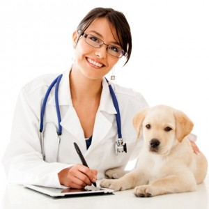 medic veterinar sursa foto femside.com