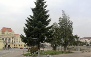 bradut centru oradea