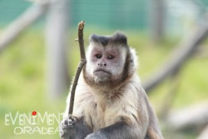 maimutica zoo oradea