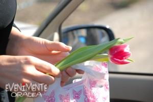floare 8 martie oradea