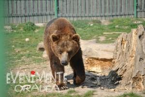urs zoo oradea