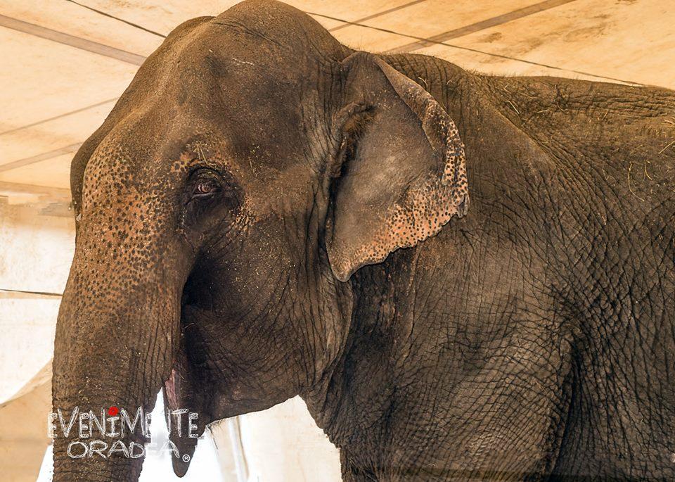 colosseum elefant