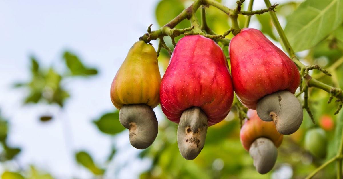 sursa foto: vinacas.blogspot.com