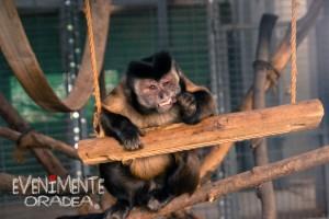 maimuta zoo oradea