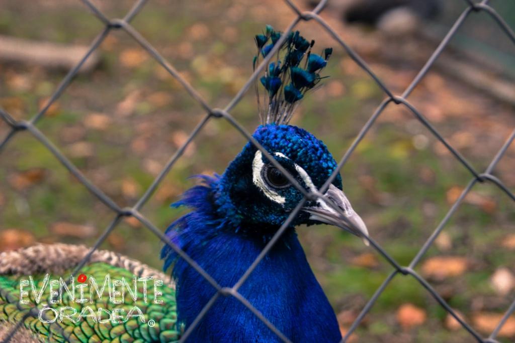 paun zoo oradea
