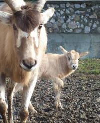 foto: Zoo Oradea