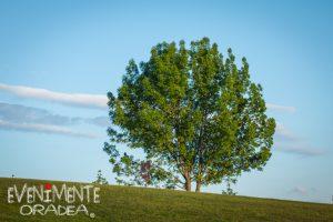 copac verde gazon iarba