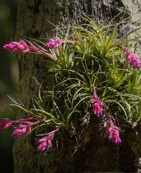 floare de aer, plante care cuăță aerul